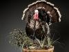 Forward Turkey Carved Pedestal